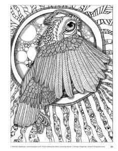 сова раскраска (9)