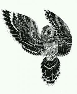 сова раскраска (95)