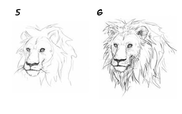 -льва Как нарисовать льва карандашом