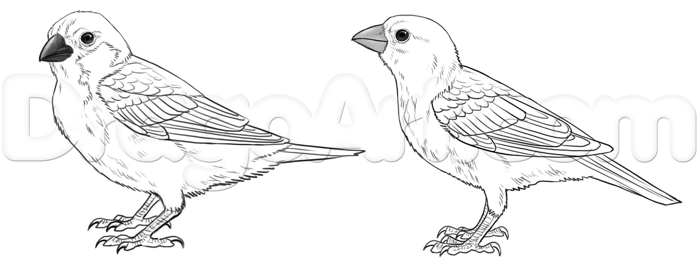 Как нарисовать воробья карандашом поэтапно