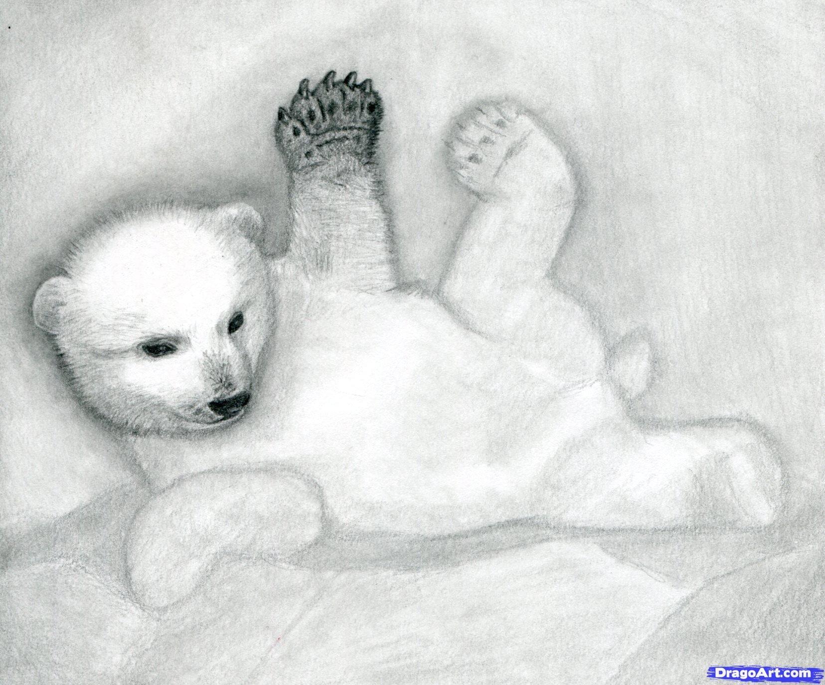 10 Как нарисовать полярного медведя