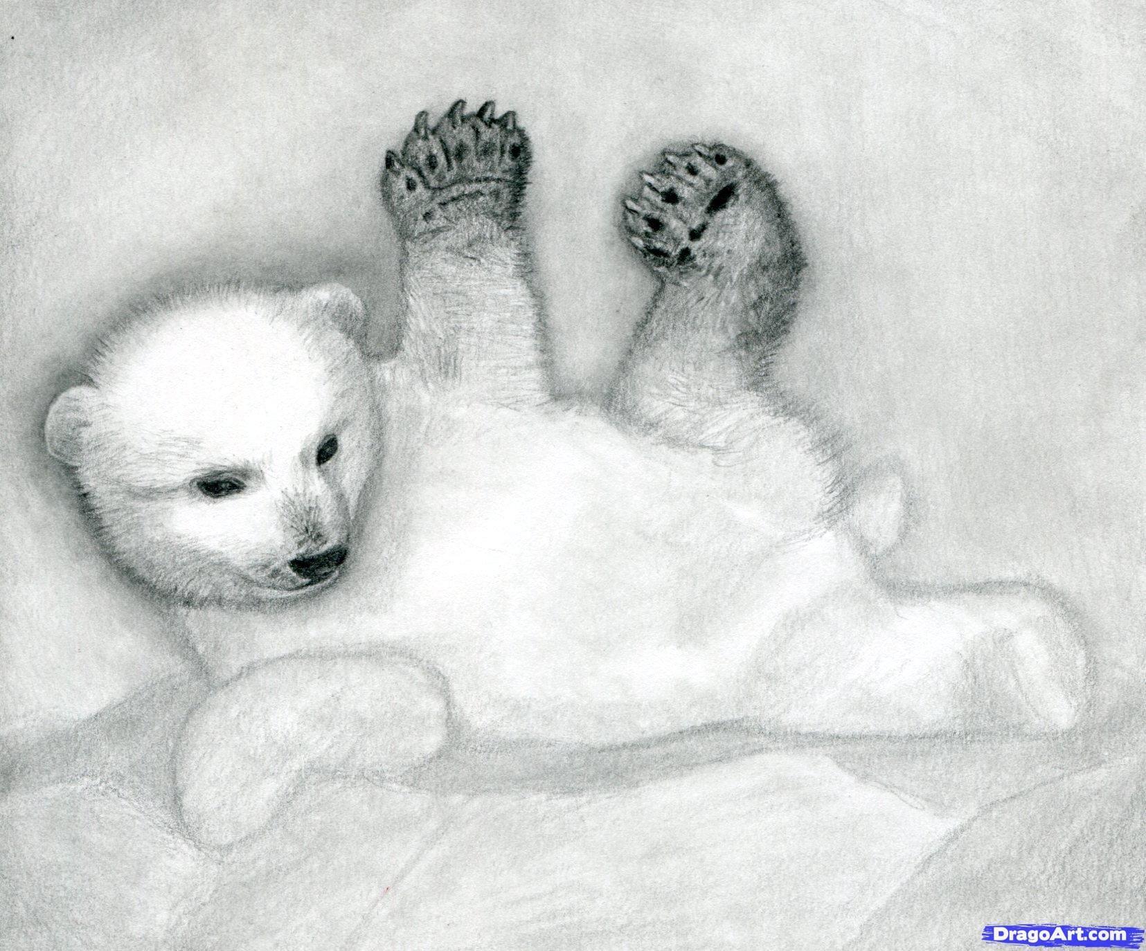 11 Как нарисовать полярного медведя