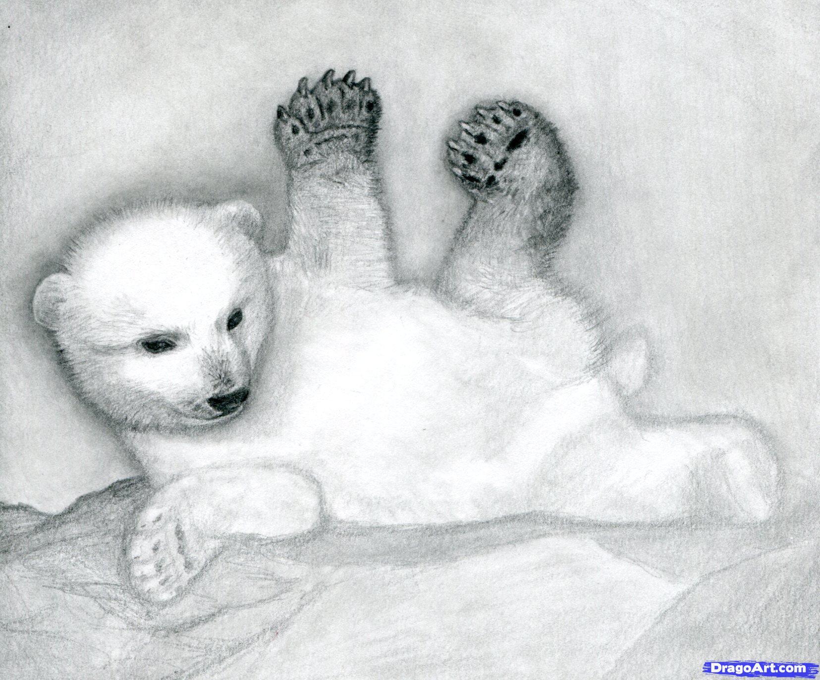 12 Как нарисовать полярного медведя