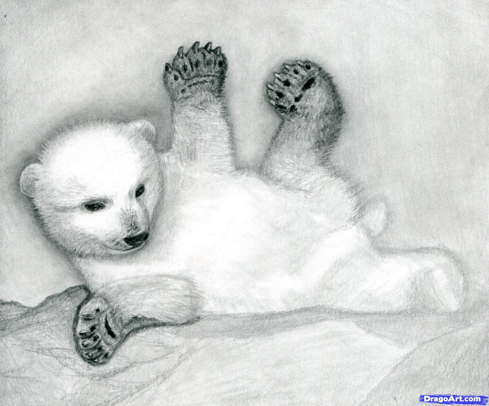 13 Как нарисовать полярного медведя