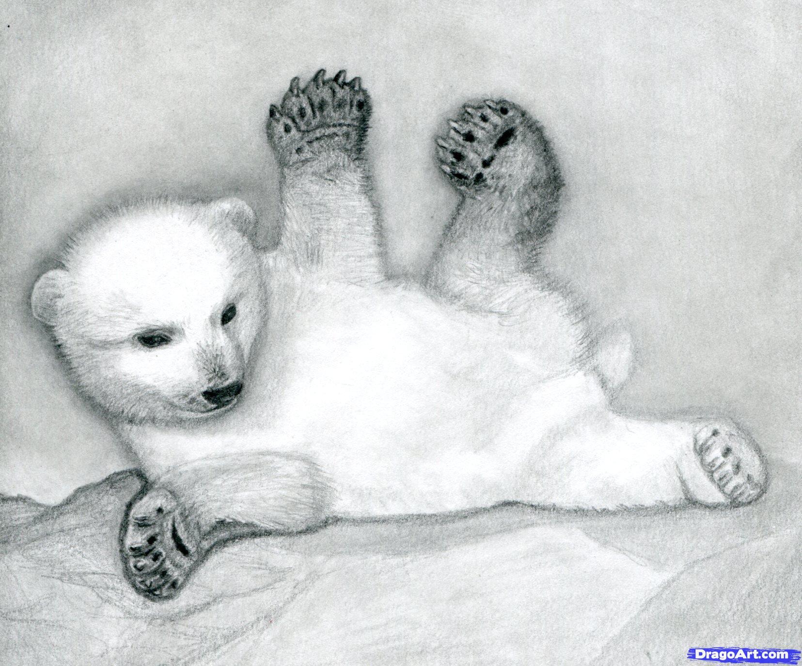 14 Как нарисовать полярного медведя