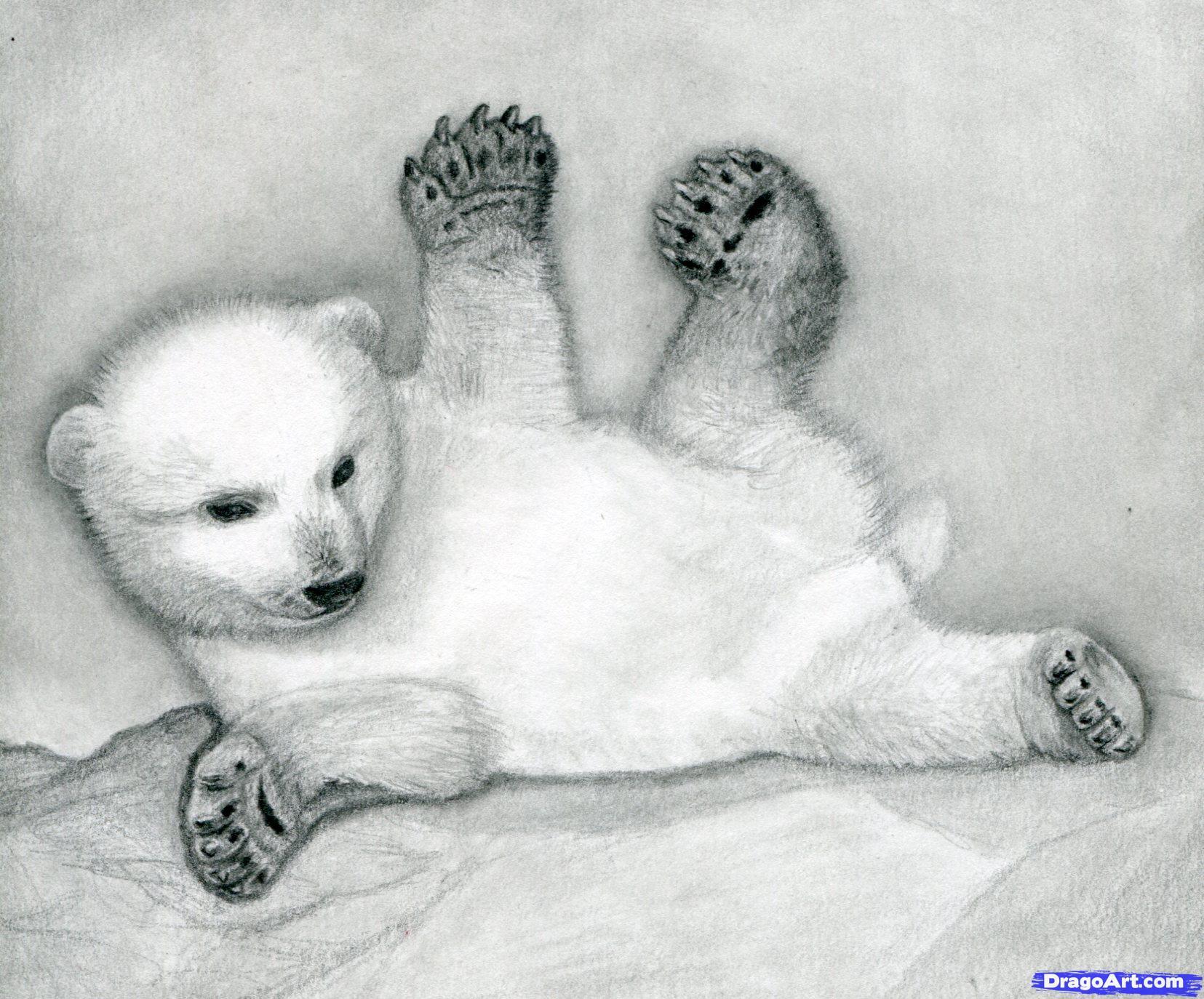 15 Как нарисовать полярного медведя