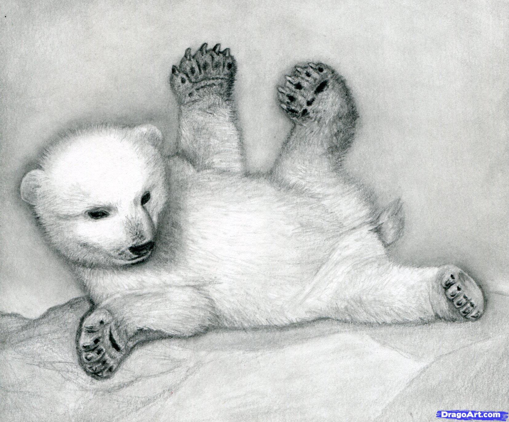 16 Как нарисовать полярного медведя