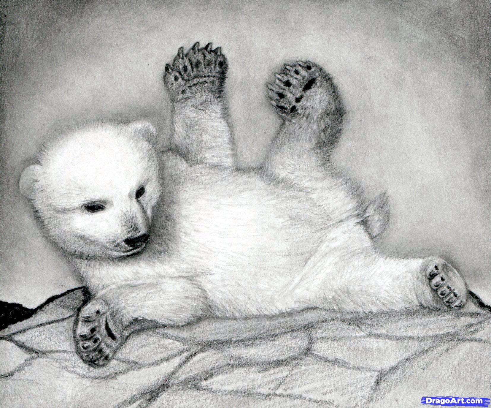 17 Как нарисовать полярного медведя