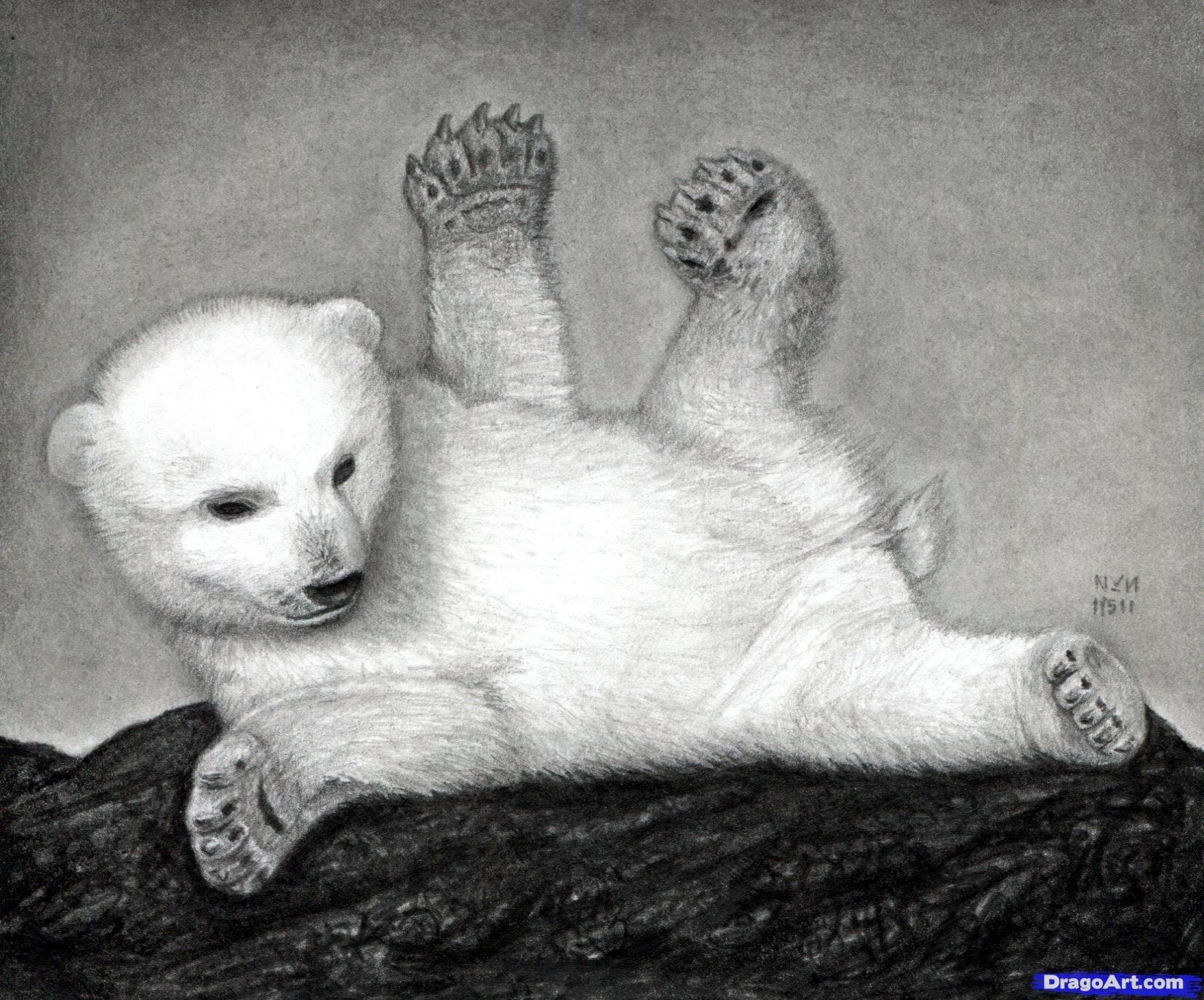 18 Как нарисовать полярного медведя