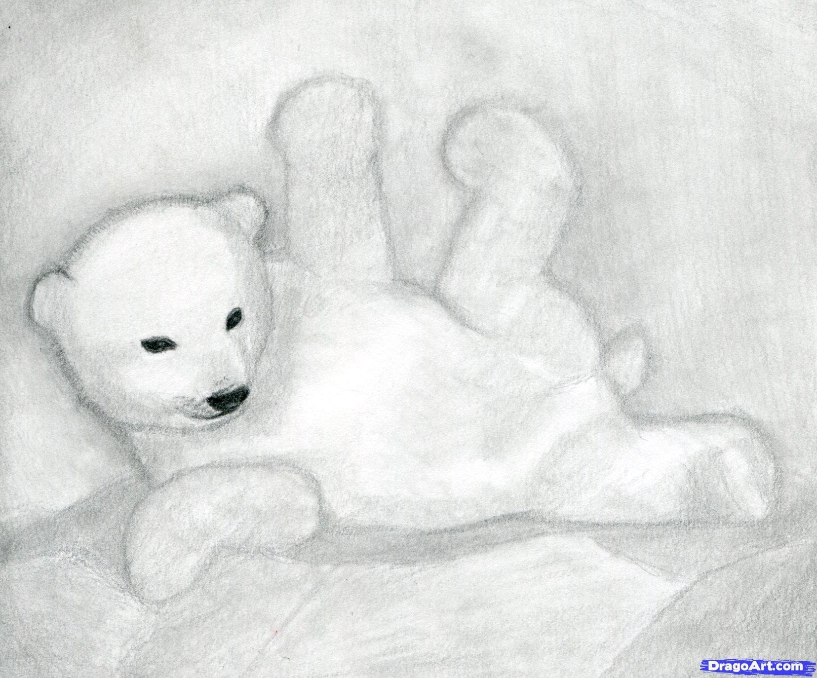 7 Как нарисовать полярного медведя