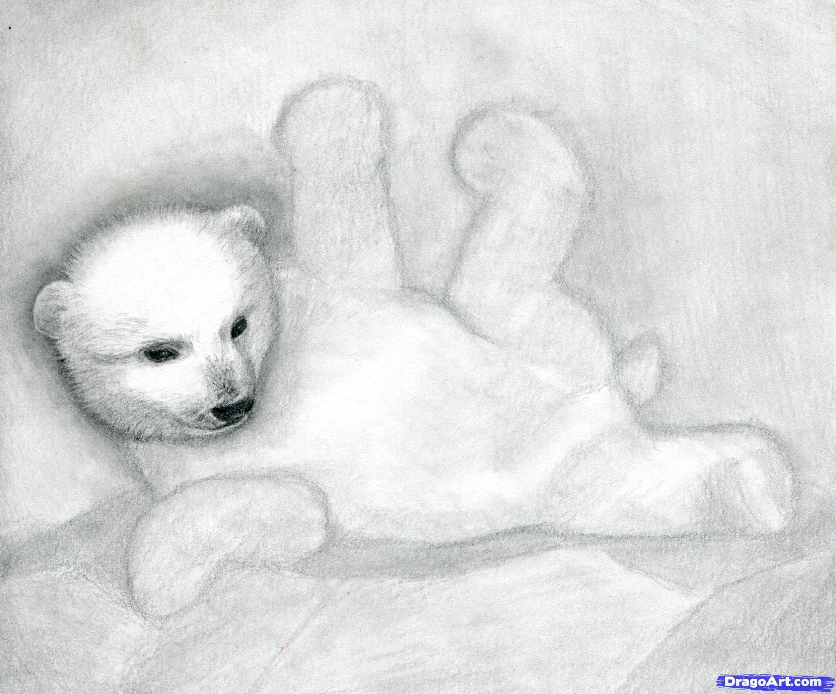 8 Как нарисовать полярного медведя
