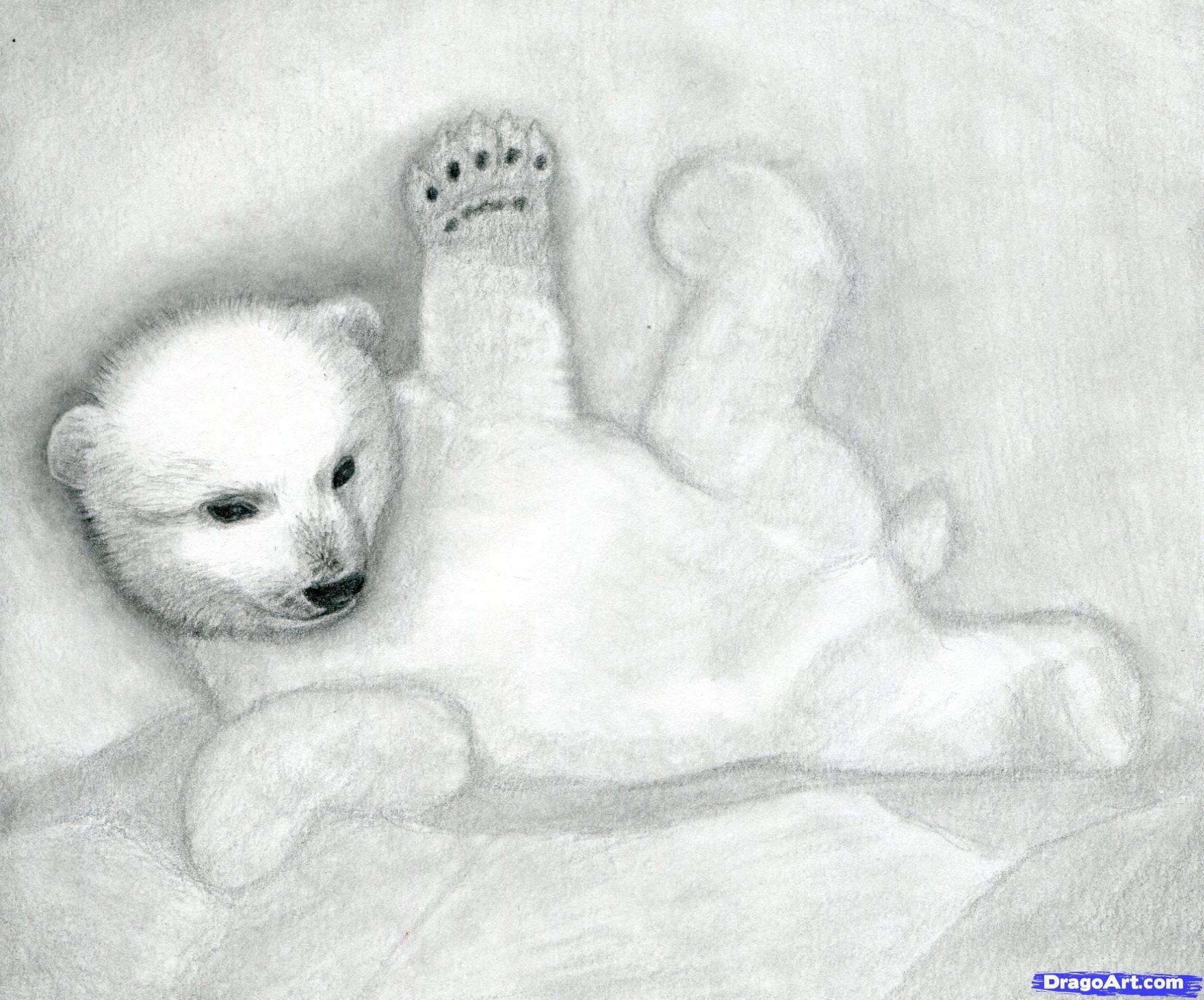 9 Как нарисовать полярного медведя