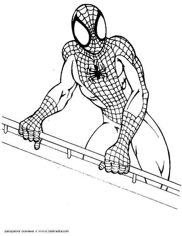 раскраска человек паук распечатать бесплатно - Рисовака
