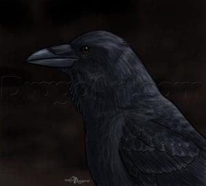 Как нарисовать ворона карандашом