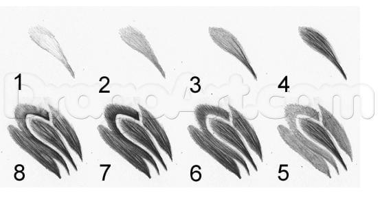 12-3 Как нарисовать ястреба