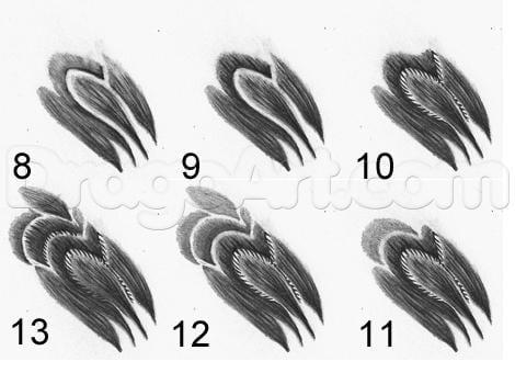 13-2 Как нарисовать ястреба
