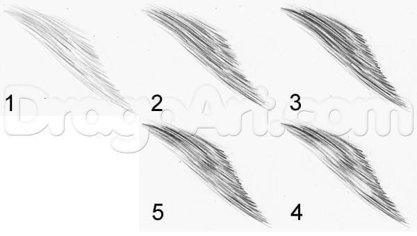 19 Как нарисовать ястреба