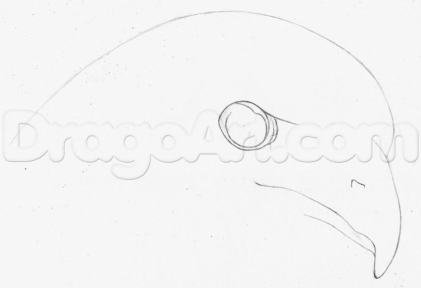 2-11 Как нарисовать ястреба