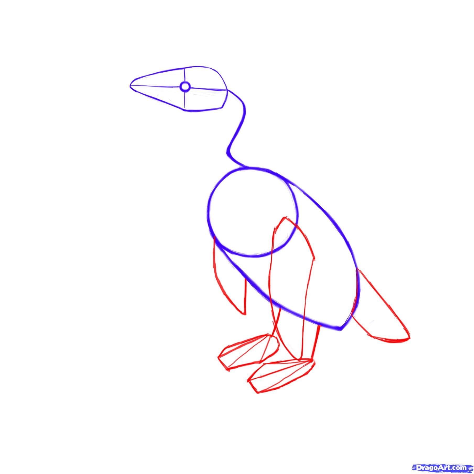 2-2 Как нарисовать пингвина карандашом