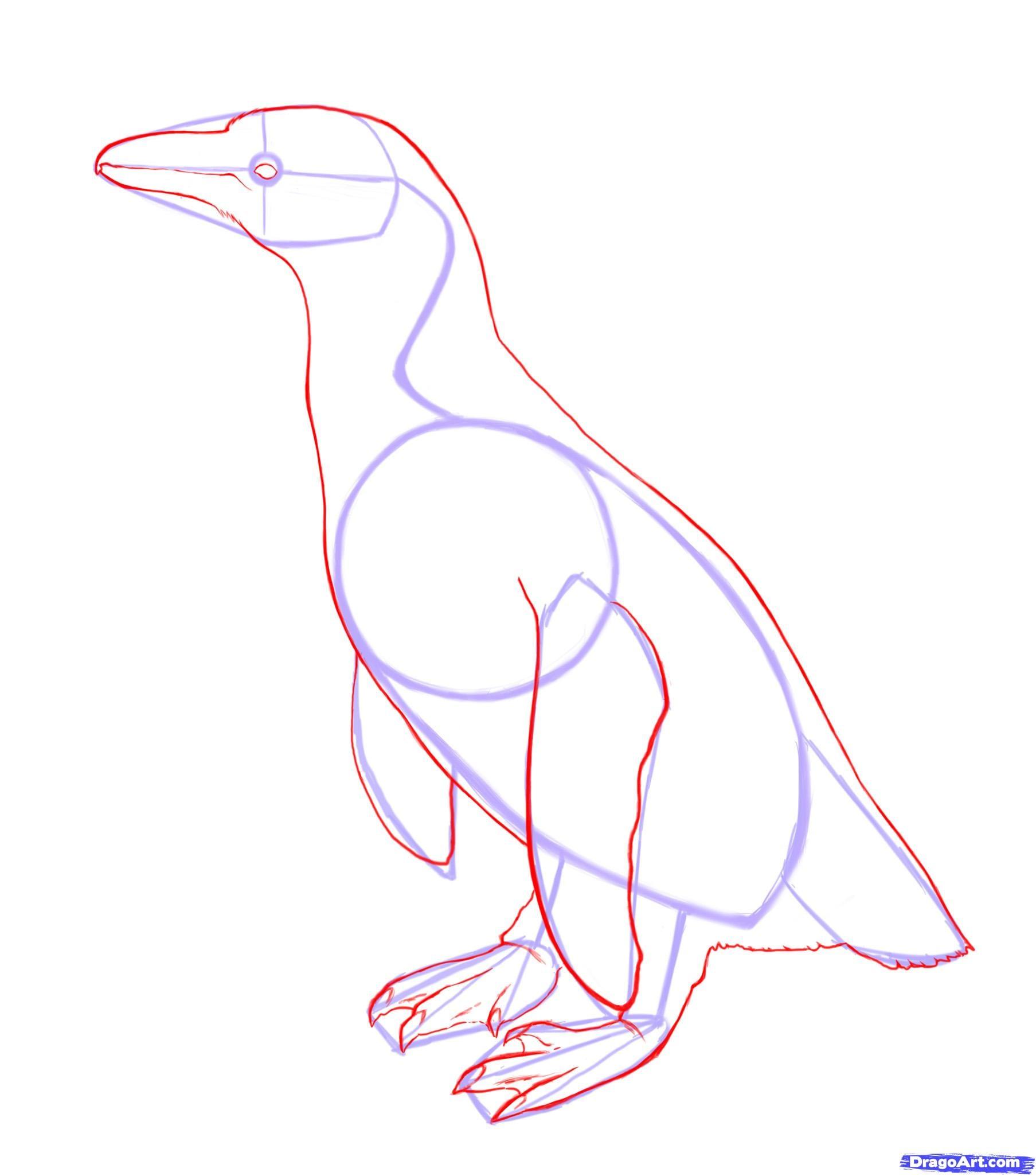 3-2 Как нарисовать пингвина карандашом