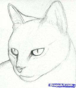 Как нарисовать морду кошки поэтапно