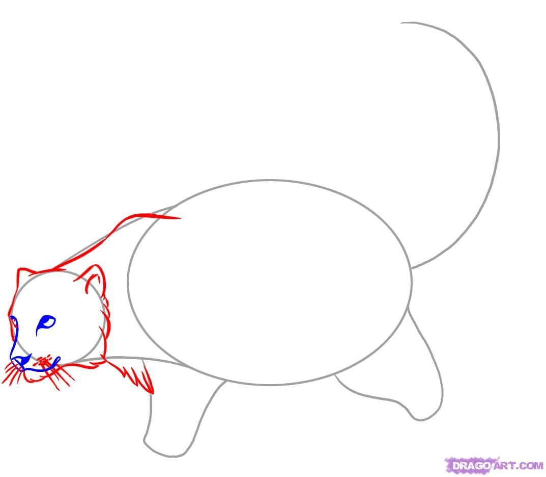 3-5 Как нарисовать снежного барса
