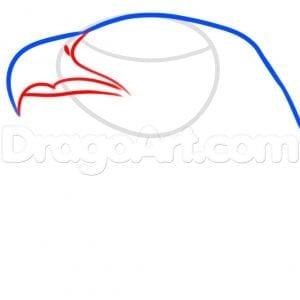 Как нарисовать голову орла