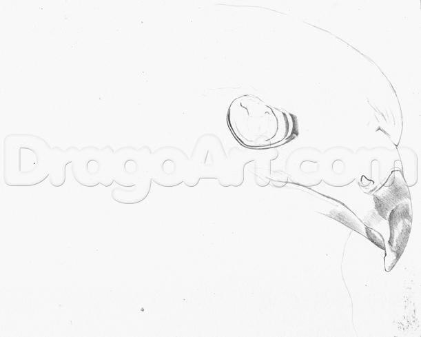 4-11 Как нарисовать ястреба