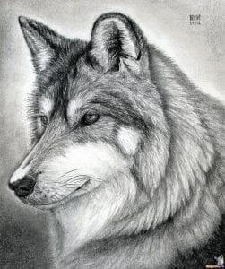 Как нарисовать голову волка
