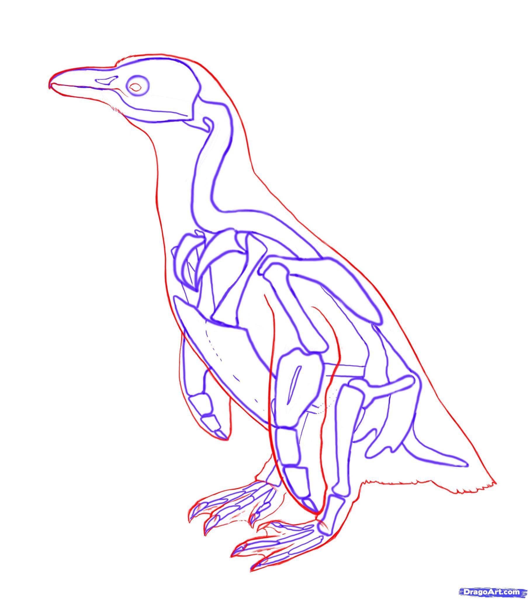 5-2 Как нарисовать пингвина карандашом