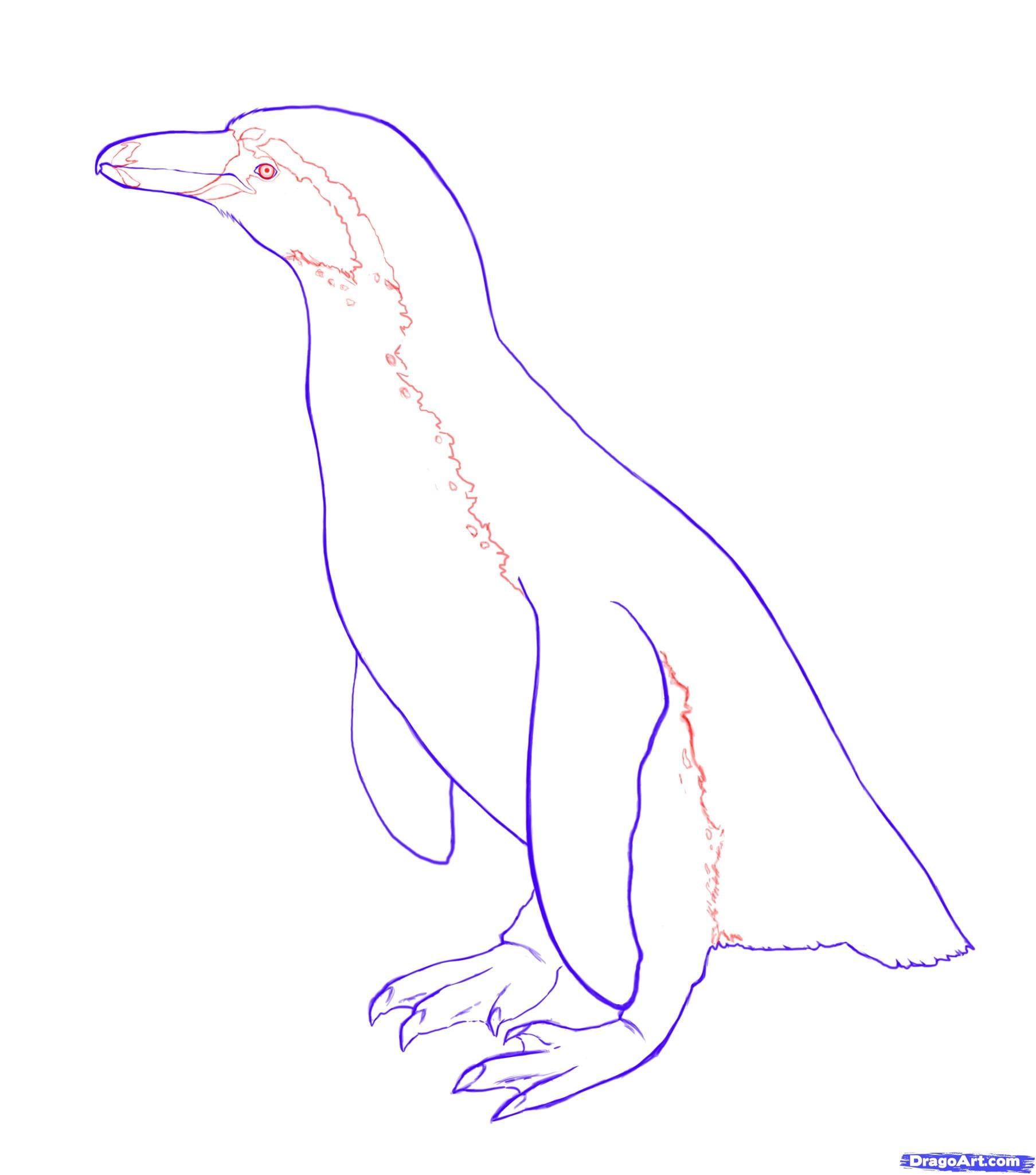 6-2 Как нарисовать пингвина карандашом
