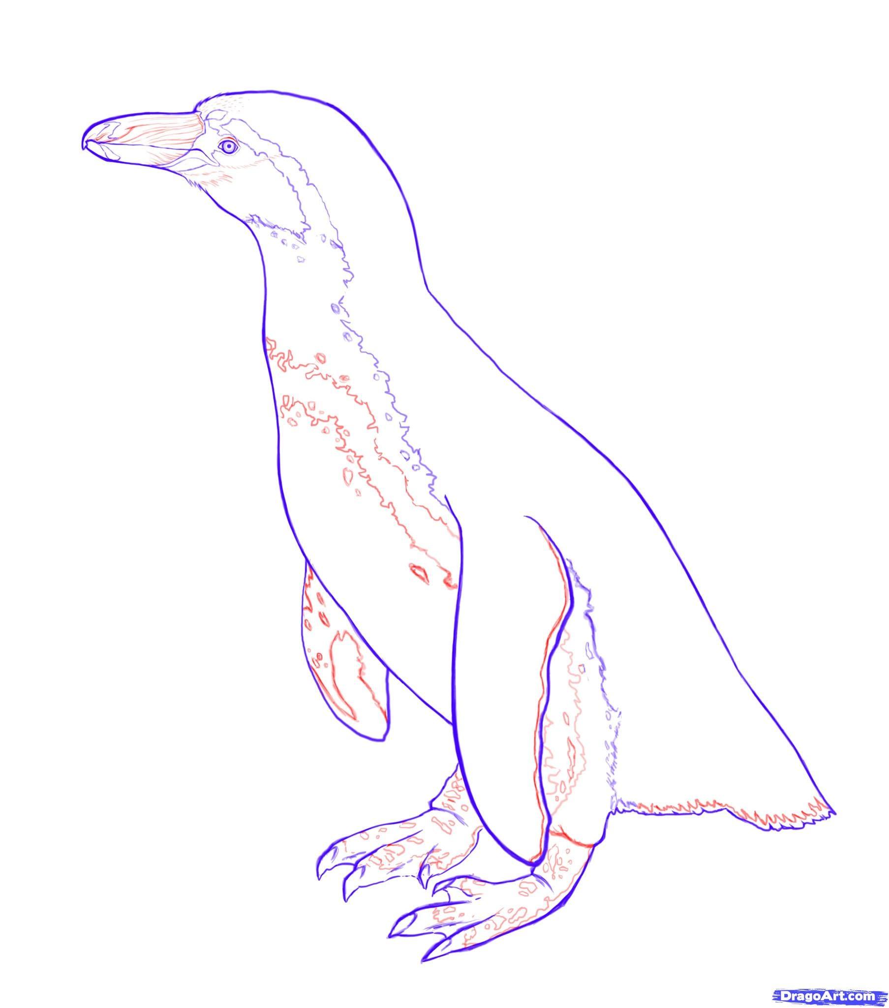 7-2 Как нарисовать пингвина карандашом