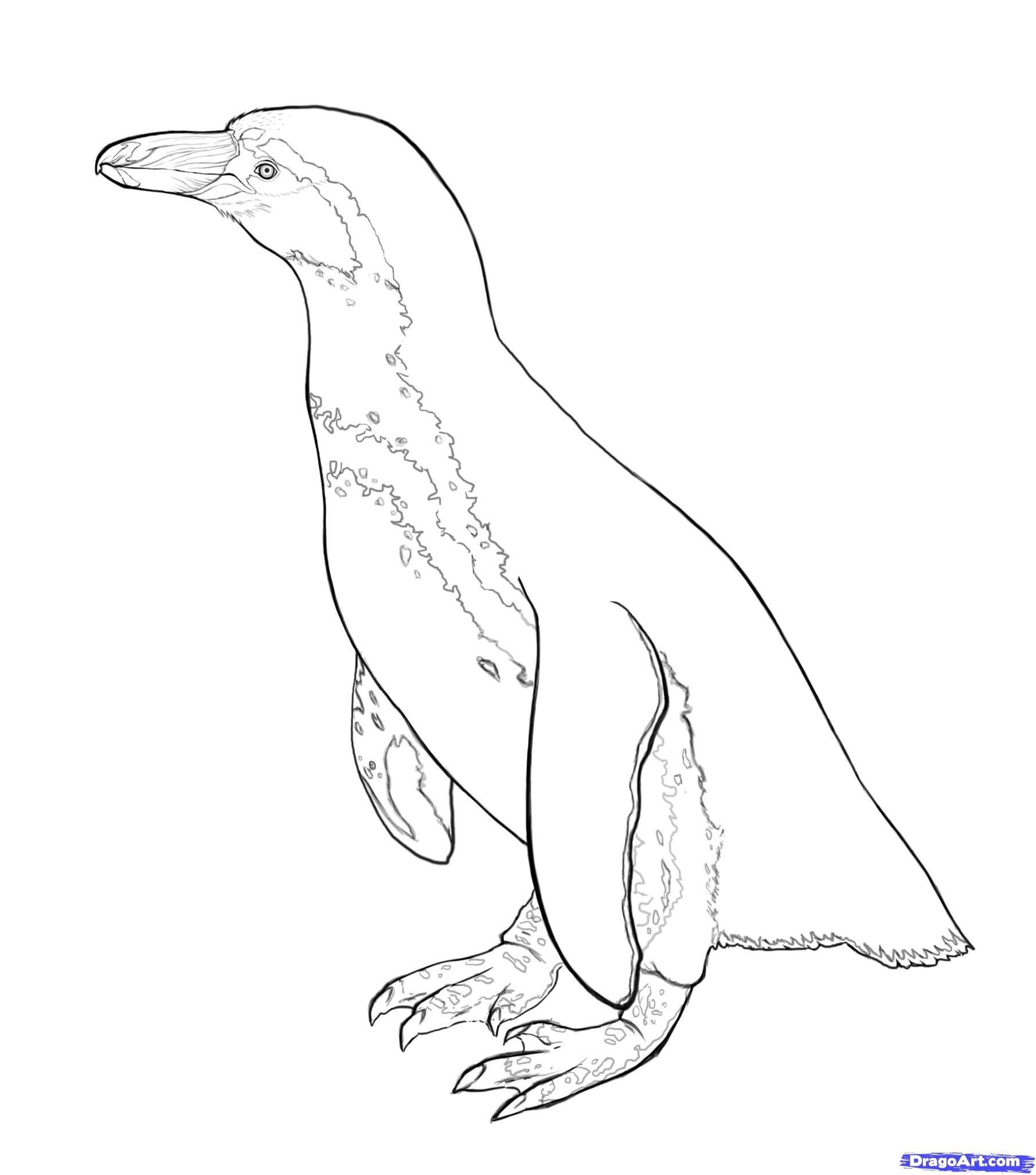 8-2 Как нарисовать пингвина карандашом