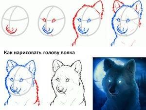 kak-narisovat-golovu-volka-300x225 Уроки рисования