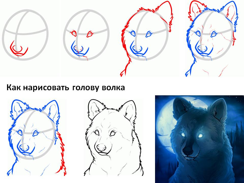 Рисуем волков поэтапно