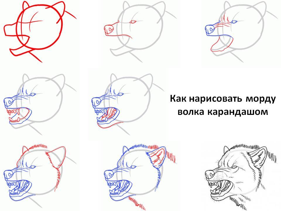 Как нарисовать морду волка карандашом