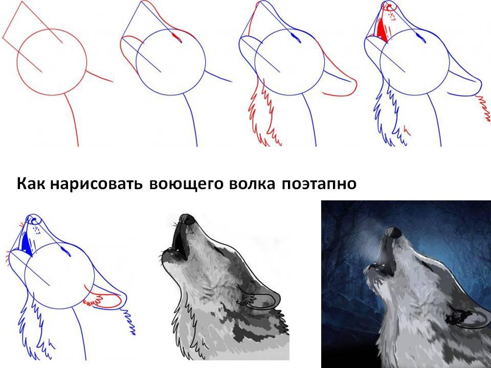 Как нарисовать воющего волка поэтапно