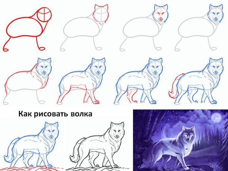 Как нарисовать красного волка карандашом поэтапно