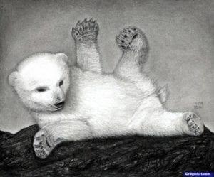 Как нарисовать полярного медведя