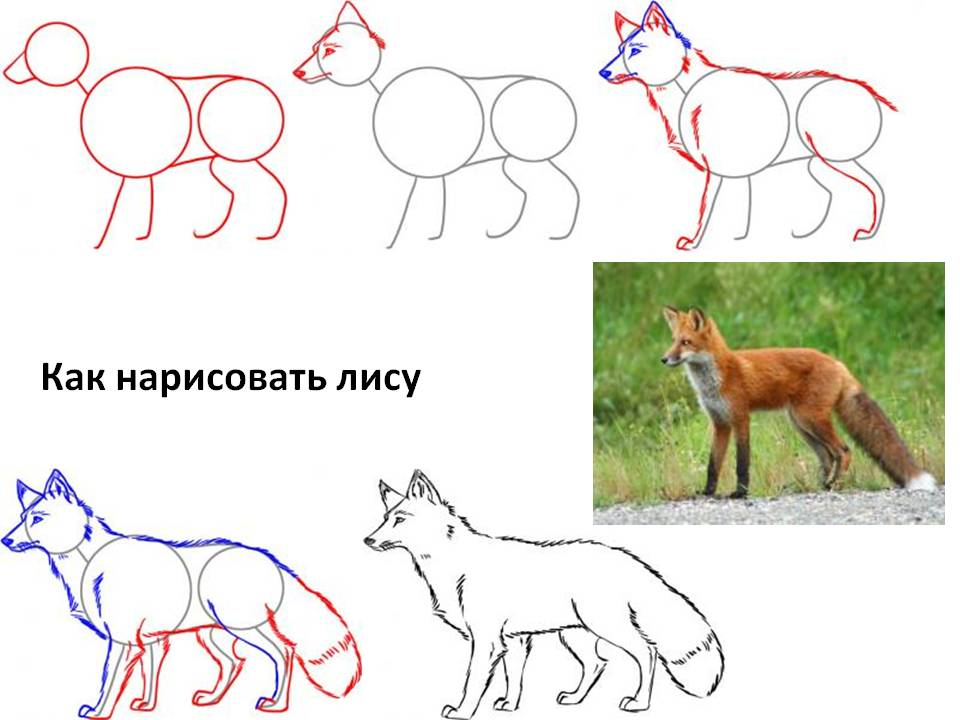 -нарисовать-лису-поэтапно Как нарисовать лису поэтапно