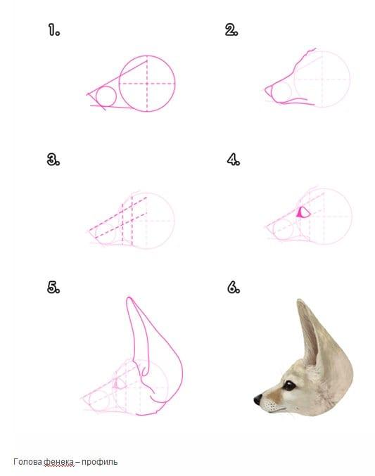 -нарисовать-морду-фенека Как нарисовать лису поэтапно