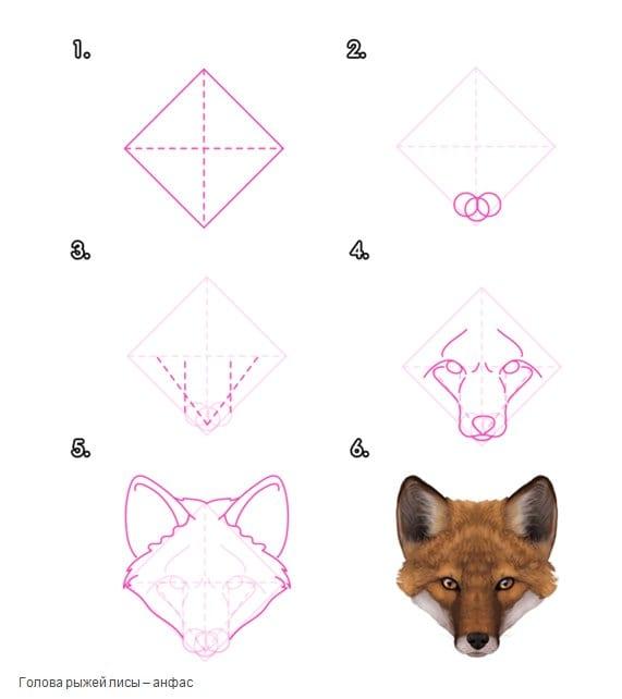-нарисовать-мордц-лисы-анфас Как нарисовать лису поэтапно