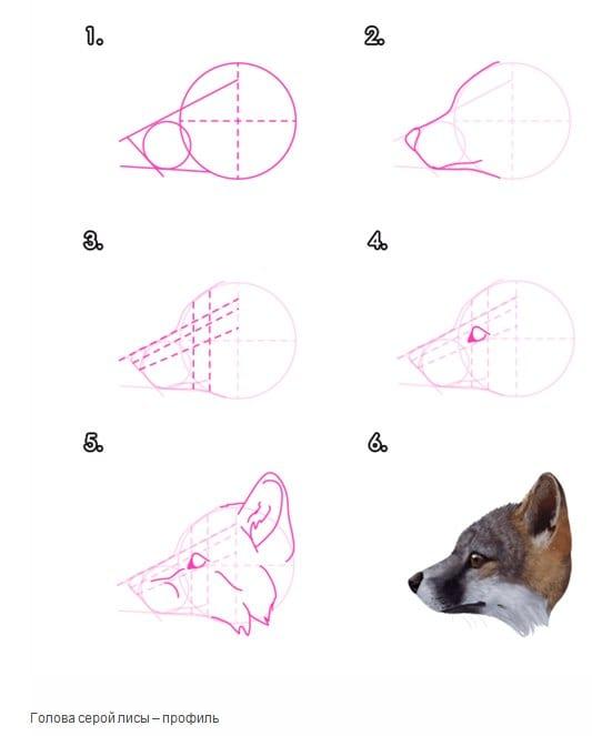 как нарисовать морду лисы в профиль