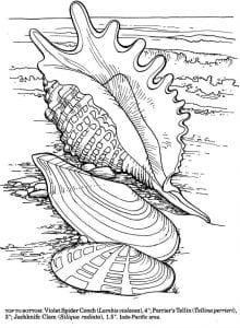 подводный мир раскраски (103)