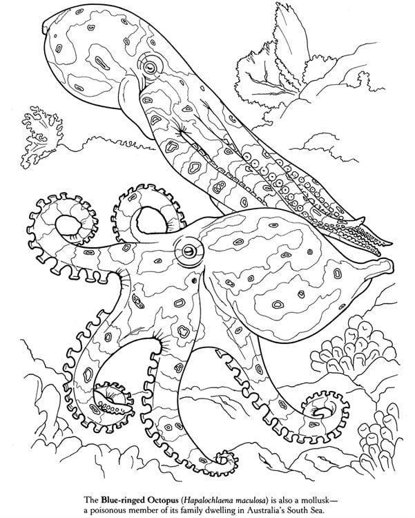 -мир-раскраски-104 подводный мир раскраски (104)