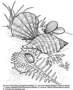 подводный мир раскраски (105)