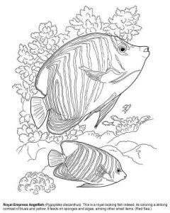 подводный мир раскраски (106)