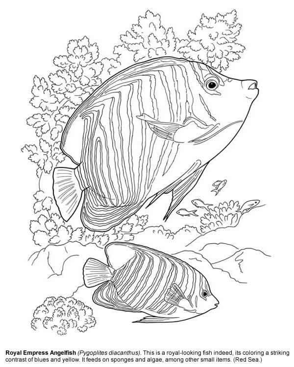 -мир-раскраски-106 подводный мир раскраски (106)