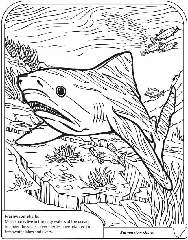 -мир-раскраски-11 подводный мир раскраски (11)