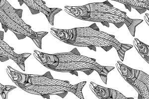 подводный мир раскраски (51)